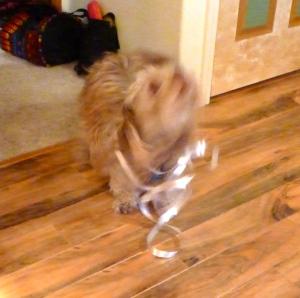Buster Got a Ribbon