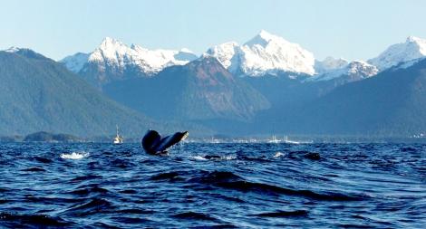 Blue Whale, Sitka, Alaska