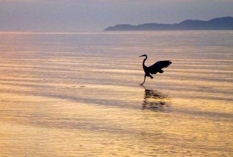 sunrise.heron