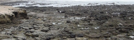 Pacific Tidepools